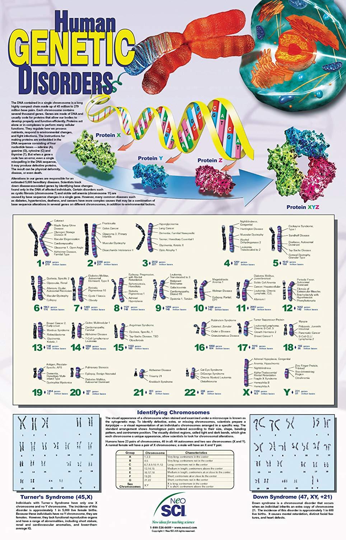 Poster sobre enfermedades genéticas humanas localizadas por cromosoma de 88 x 58 cm